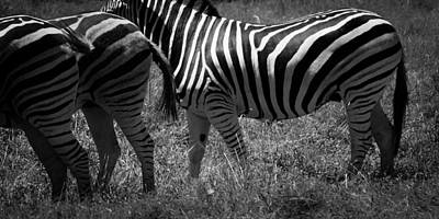 Photograph - Stripes by Tim Nichols
