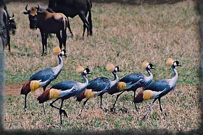 Strutting Crested Cranes Art Print