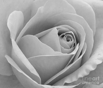 Study In Black And White Art Print by Cindy Manero