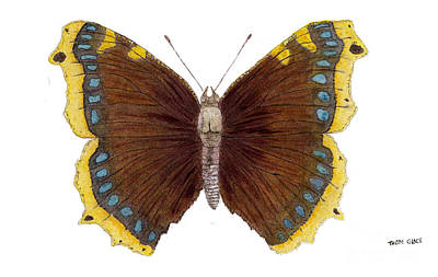 Painting - Study Of A Mourning Cloak Butterfly by Thom Glace