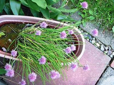 Indiana Photograph - Study With Lavendar by Alys Caviness-Gober