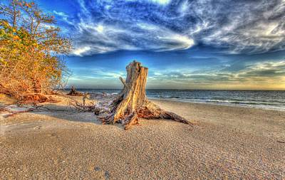 Photograph - Stump Beach by Sean Allen