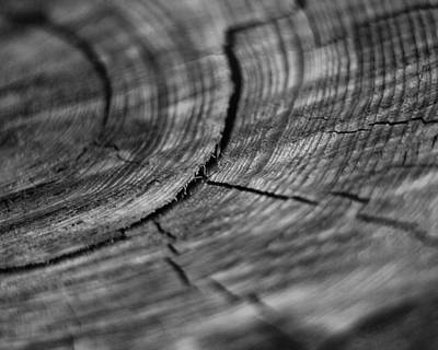 Photograph - Stump by Marlo Horne