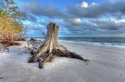 Photograph - Stumpy by Sean Allen
