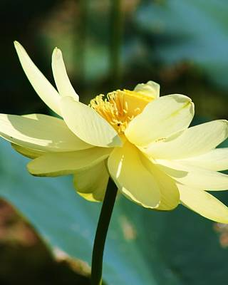 Art Print featuring the photograph Stunning Water Lily by Bruce Bley