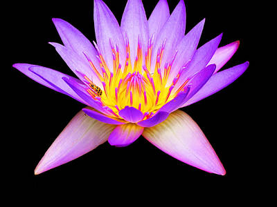 Spritual Light Photograph - Stunning Waterlily by Vijay Sharon Govender