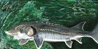 Painting - Sturgeon by Sara Stevenson