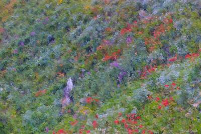Photograph - Subalpine Wildflowers - Impressionism by Heidi Smith