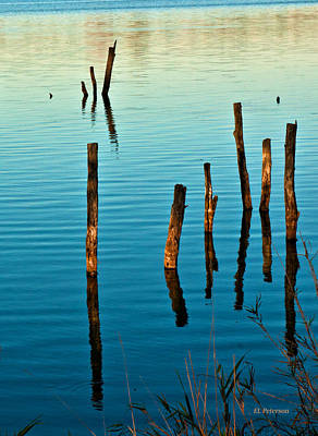 Photograph - Submerged Trees At Sunset by Edward Peterson