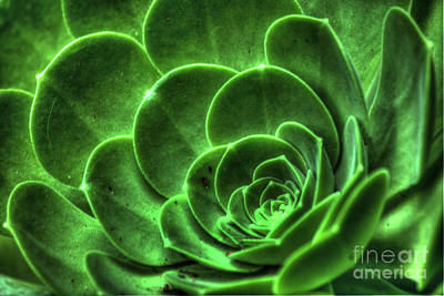 Photograph - Succulent Detail by Morgan Wright