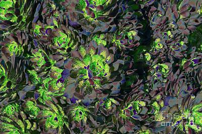 Photograph - Succulent Gmo by Afroditi Katsikis