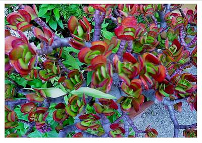 Photograph - Succulent Ole' by Frank Wickham