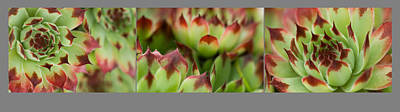 Art Print featuring the photograph Succulent by Trevor Chriss