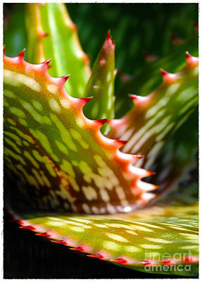 Succulents With Spines Art Print by Judi Bagwell