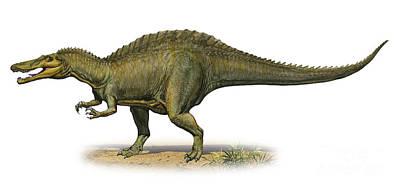 Suchomimus Tenerensis, A Prehistoric Art Print