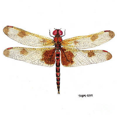 Painting - Sudy Of A Calico Pennant by Thom Glace
