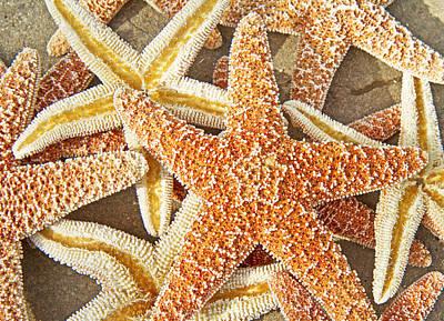 Echinoderm Photograph - Sugar Cookies  by Betsy Knapp