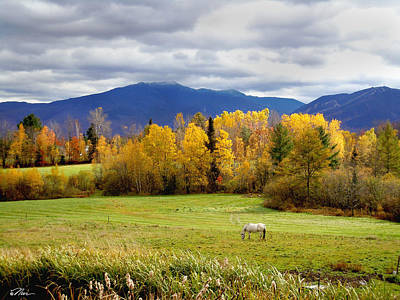 Photograph - Sugar Hill Road New Hampshire by Nancy Griswold