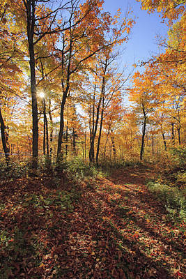 Jul08 Photograph - Sugar Maple Trees In Fall by Yves Marcoux