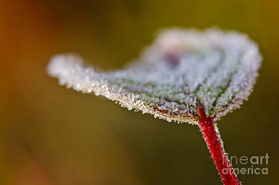 Photograph - Sugared With Frost... by Christine Kapler