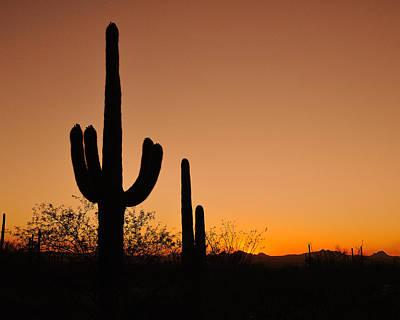Photograph - Suguaro Sunset by Tony Beck