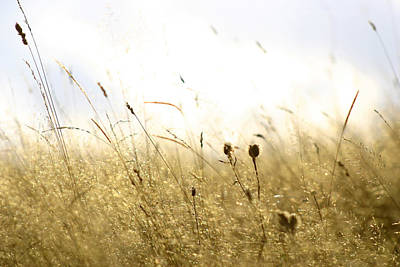 Art Print featuring the photograph Summer Field by Emanuel Tanjala