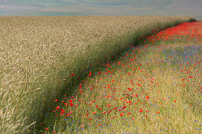 Y120831 Photograph - Summer Fields by Sedge59
