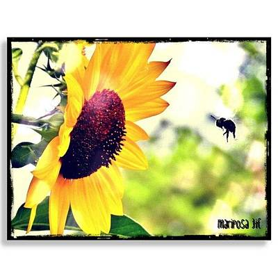 Sunflowers Wall Art - Photograph - Summer Fling by Mari Posa