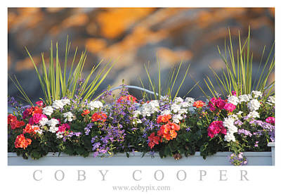Photograph - Summer Floral by Coby Cooper
