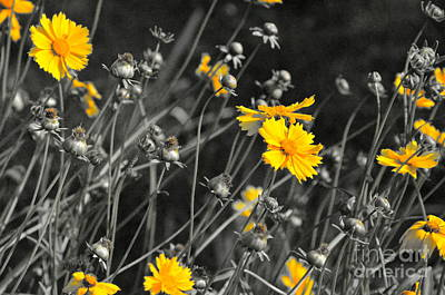 Photograph - Summer Flowers by Carol  Bradley