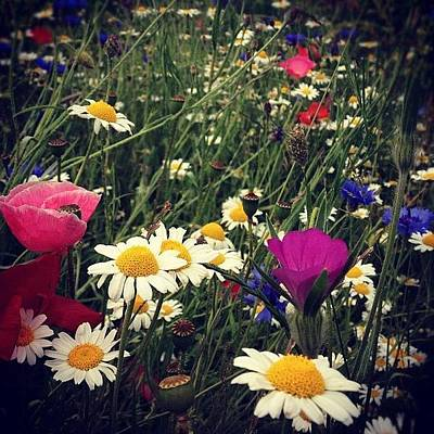 Colourful Wall Art - Photograph - #summer #flowers #flower #instagood by Jake Baxter