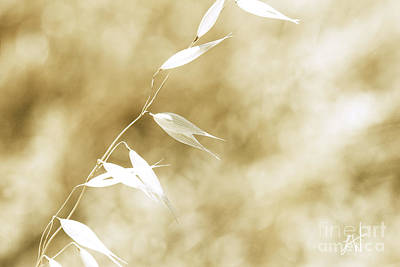 Photograph - Summer Grass by Artist and Photographer Laura Wrede