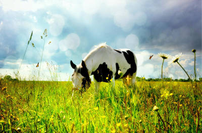 Photograph - Summer Graze by Emily Stauring