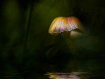Mushroom Digital Art - Summer Light by Ron Jones