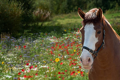 Photograph - Summer Pasture by Ari Salmela