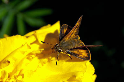 Photograph - Summer Skipper by Tikvah's Hope