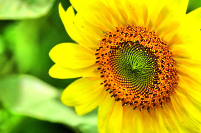Sunflower Photograph - Summer Smile by Emily Stauring