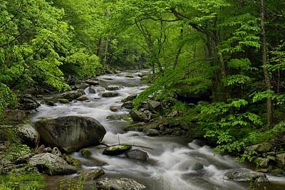 Summer Stream In Great Smoky Mountains  Art Print by Darrell Young