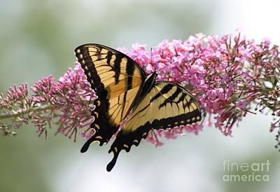 Photograph - Summer Time Pleasures by Living Color Photography Lorraine Lynch