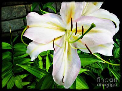Summer White Madonna Lily Art Print by Joan  Minchak