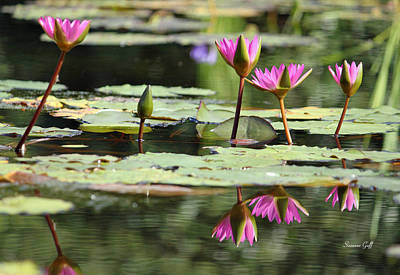 Lotus Blossoms Photograph - Summertime Magic by Suzanne Gaff