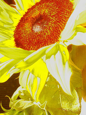 Photograph - Sun Baked Accident by Mark Holbrook