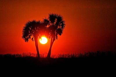 Sun Between 2 Palms Original by Michael Thomas