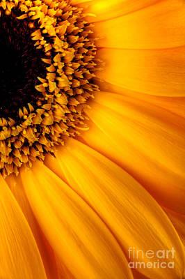 Sun Burst - Sunflower Art Print by Martin Williams