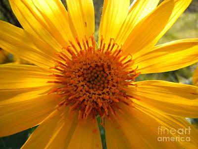 Photograph - Sun Burst by KD Johnson