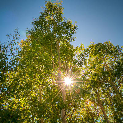 Photograph - Sun Burst Through The Trees by Connie Cooper-Edwards