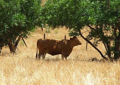Photograph - Sun Dappled Cow by Kristen Fox