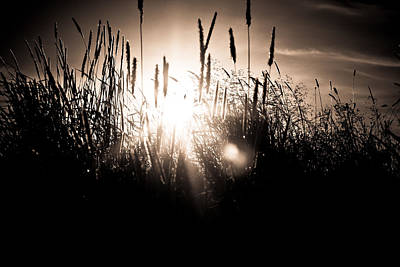 Photograph - Sun Flare Through Grass by Anthony Doudt