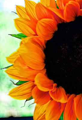 Digital Art - Sun Flower by Charles Muhle