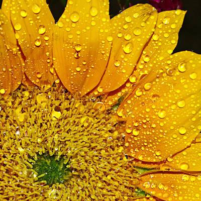 Sun Flower Art Print by Michelle Armstrong
